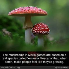 The mushrooms in Mario games The More You Know, Good To Know, Weird Facts, Fun Facts, Awesome Facts, Geek Out, Best Funny Pictures, Card Games, Illusions