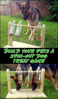 Keep your furry friends busy and entertained with this spinning plastic bottles dog treat game. Do you need one for your pets? - My Doggy Is Delightful Pet Dogs, Dogs And Puppies, Pets, Outdoor Dog Toys, Dog Enrichment, Dog Playground, Playground Design, Diy Dog Toys, Homemade Dog Toys