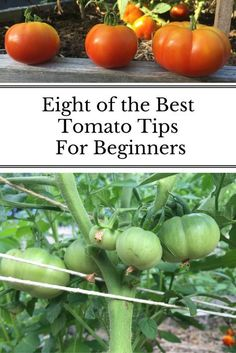 Tomatoes were among the first plants I starting growing in my garden. These are the tips that help me the most and I still use each season! #gardenforbeginnersraisedbed