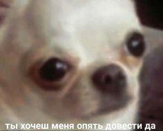 Funny Video Memes, Dog Memes, Dankest Memes, Cute Animal Memes, Funny Animals, Hello Memes, Russian Memes, Cute Love Memes, Mood Pics