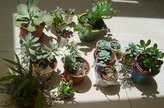 Sunbathing succulents.