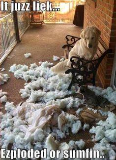 oops !