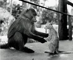 monkey, cat