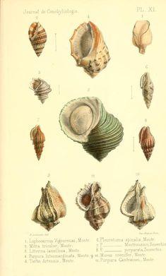 t 9 (1861) - Journal de conchyliologie. - Biodiversity Heritage Library