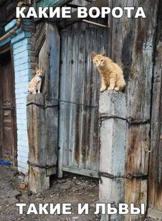 ideas funny dogs and cats humor Funny Cats And Dogs, Bad Cats, Cats And Kittens, Super Funny Pictures, Funny Images, Animals And Pets, Funny Animals, Cat Boarding, Ginger Cats