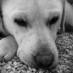 My dog <3 He name is Habi