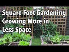 Why You Should Try Square Foot GardeningREALfarmacy.com | Healthy News and Information