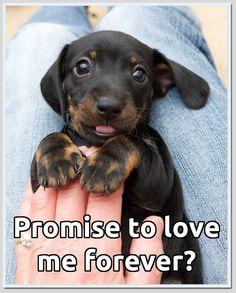 Prometes amarme por siempre?