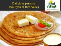 Authentic parathas topped with desi ghee