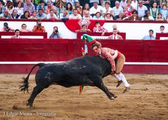 """The Pega"" only done in the Portugal and Azores. Instead of the fight ending with the matador killing the bull like in Spain. The Portuguese do the Pega where the men surround the bull and drag the bull back to the corral where the wounds are then treated and the bull will be released after back to the pasture to live another day."
