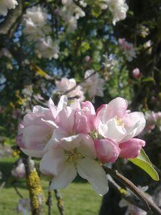Ein Frühlingsmorgen   Slow Living, Plants, Inspiration, Biblical Inspiration, Plant, Planting, Planets, Inhalation