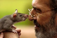 A man's best friend....his pet Gambian Pouch rat !