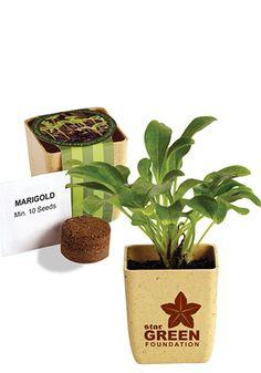 Imprinted Fully Organic Herb Flower Pot Sets