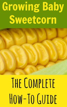 Growing baby sweetcorn isn't just easy; it's also great fun and can save you a load of money. Even if you've only got a tiny patch of ground available, here's how to grow baby corn the easy way. #frugality #budgeting