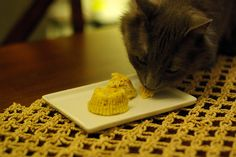 Easy tuna birthday cupcakes for cats! =]