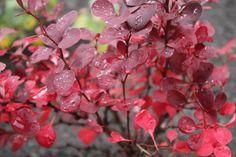 purppurahappomarja Fruit, Garden, Flowers, Garten, Lawn And Garden, Gardens, Gardening, Royal Icing Flowers, Outdoor