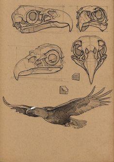 Новости Eagle Skull, Bird Skull, Bird Art, Eagle Sketch, Eagle Artwork, Insect Anatomy, Animal Skulls, Animal Skull Drawing, Animal Drawings