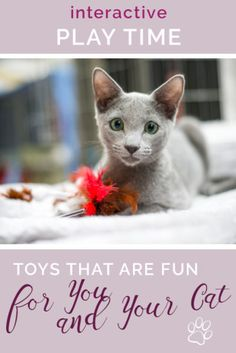 Cats Toys Ideas - Fun Toys for You and Your cat at Playtime! - Ideal toys for small cats Cat Throwing Up, Best Interactive Cat Toys, Cat Vs Dog, Diy Cat Toys, Ideal Toys, Mama Cat, Cat Memorial, Cat Behavior, Preschool Toys