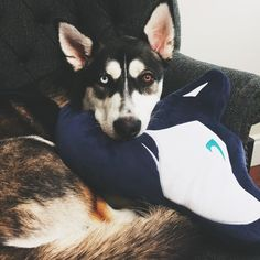 """""""Aw Wolf loves my wolf pillow too! If you want one link is in bio! """""""
