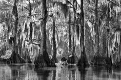 Kajakken in Louisiana