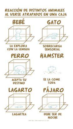 Reacción de distintos animales al verse atrapados en una caja.