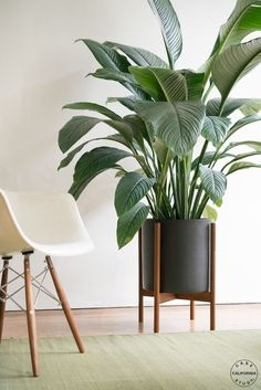 Modernica Case Study Ceramic XL Cylinder with Wood Stand. Outdoor Plants, Potted Plants, Plants Indoor, Indoor Outdoor, Home Decoracion, Interior Decorating, Interior Design, Interior Modern, Plant Decor