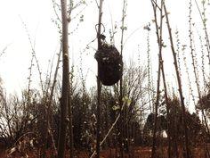 Lone Nest