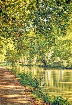 The Tree-lined Canal du Midi in the South of France