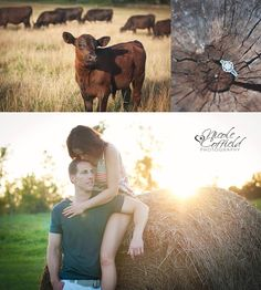 brookside farms  country engagement photo session ~ farm couple photoshoot, ring shot, cows, sunflare, hay, storyboard, candid shots, collage, back lit brookside farms, Louisville ohio engagement photography