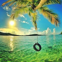 """fantastic_earth: """"US Virgin Islands photo by Destinations, Us Virgin Islands, Relaxing Day, Merida, Palm Trees, Places To See, Cool Pictures, Nature, Beautiful Places"""