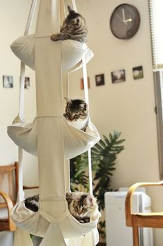 The Cat's Trapeze ~ product from The Netherlands ~ hanging play & rest station for cats, in 2- or 3-tier models | by CatsTrapeze.us