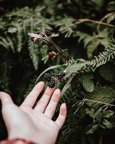 I Love Foraging For Wild Food At This Time Of Year Blackberries Are Just So