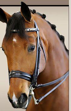 9846c8e4f5 Beautiful dressage horse Horse Love
