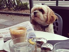 Unlike this Parisian pooch. Picture: Diana Bowman