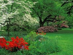 Spring landscape with red azalea