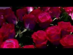 Giovanni Marradi - Tango de Roses - YouTube