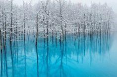 Blue Pond in Biei Hokkaido