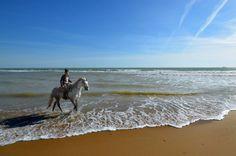 Paseo a caballo por las playas de Doñana (Huelva) / Horseback riding along the beaches of Doñana (Huelva)