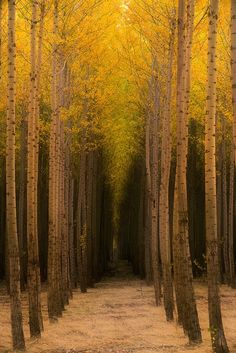 coffeenuts:  The Passage by Rick Lundh - http://ift.tt/1sRMPiN
