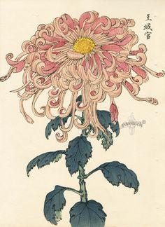 Chrysanthemum woodblock print by Keika Hasegawa. 1st Edition, 1893