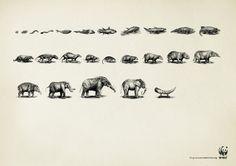 WWF: Evoluzione