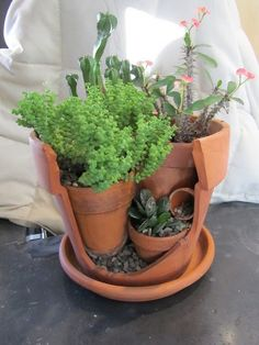 Me encantan las plantas en combinaciones de recipientes no convencionales.