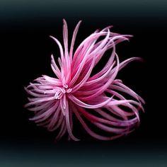 Legeron Silk Flower