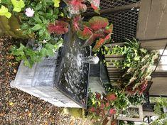 Deborah Silver Water In The Garden