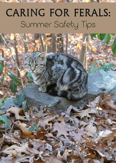 Caring for feral cats in your neighborhood? Check out these important tips to help keep them safe during the blazing hot summer months! Feral Cat Shelter, Feral Cat House, Outdoor Cat Shelter, Outdoor Cats, Feral Cats, Cat Shelters, Tnr Cats, Animal Shelter, Cat Care Tips