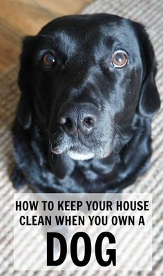 How to keep your house clean when you have a dog - tips on cleaning pet hairs, bad dog odour and everything to keep your house squeaky clean!