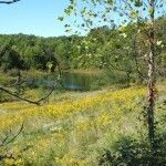 Watson property in Guernsey County, Ohio. Six gorgeous tracts remain – ranging in size from 5 to 8 acres. Scenic with a lovely pond. Guernsey, Land For Sale, Acre, Pond, Ohio, Investing, Outdoor, Outdoors, Water Pond