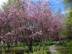 Kuvahaun tulos haulle japanilaisia puutarhoja