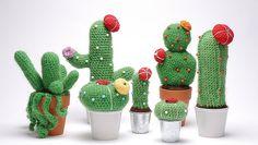 Crochet Cactus!