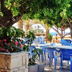 Pomos, Cyprus — by Sharon Bowman. Kanalli Fish Tavern, Pomos Point, Pomos, Cyprus. Approx 19 kms from Polis along the coast road. Excellent fresh fish...